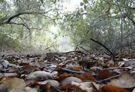 Santa Rosa Plateau Ecological Reserve : Santa Rosa Plateau
