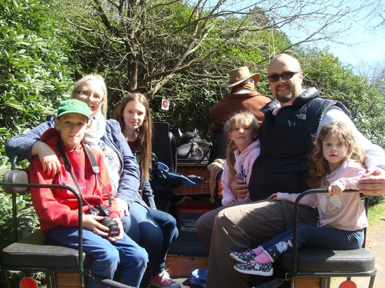 Ascot Carriages: Family ride on Henry