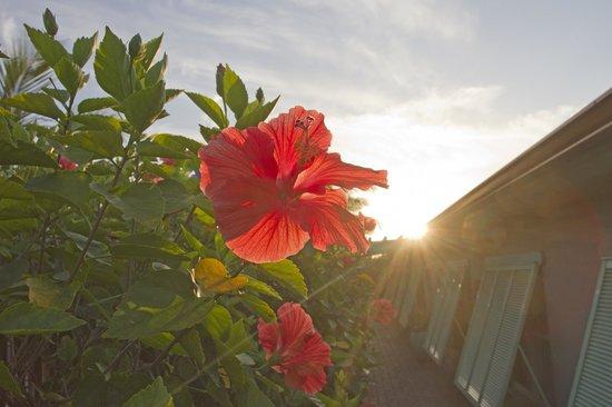 Seashell Suites Resort: Hibiscus