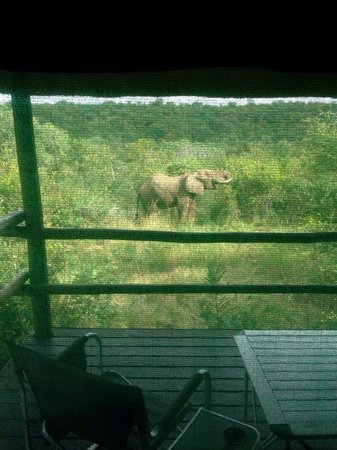 Muweti Bush Lodge: Elephants at the water hole outside our cabin