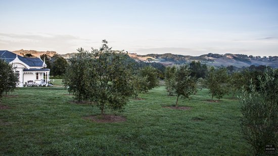 The Kauri Villa : Olive grove