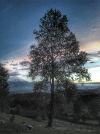 Mirador los Volcanes: Desde cabaña Lonquimay