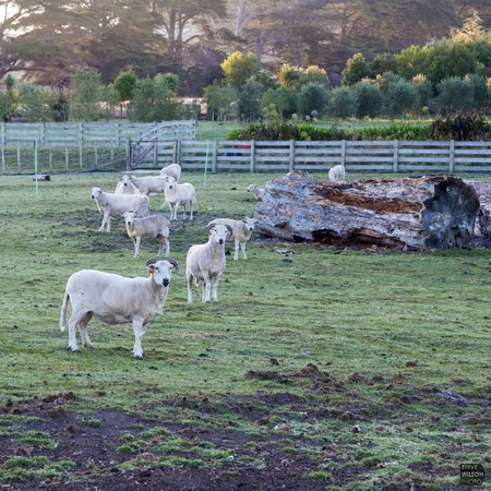 The Kauri Villa: Farm animals