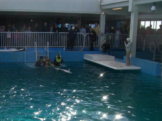 Clearwater Marine Aquarium: dolphin and trainer for a non-releasable dolphin