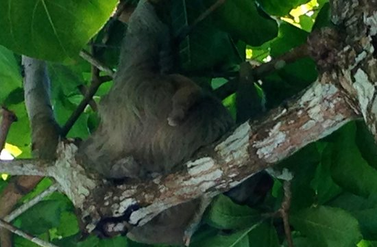 Hotel Verde Mar : Momma sloth and baby