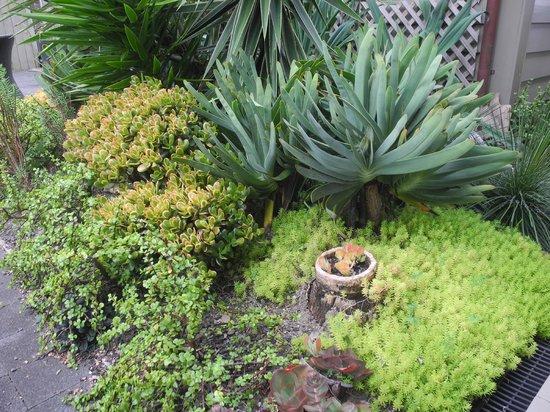 Flagstaff Lodge & Day Spa: Patio Garden at Lodge