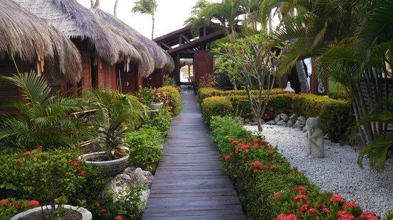 Manchebo Beach Resort & Spa : Spa area where massages are given