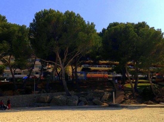 Apartamentos Portofino y Sorrento: On the beach outside the apartments.