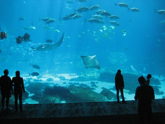 Georgia Aquarium: A view from the observation deck!