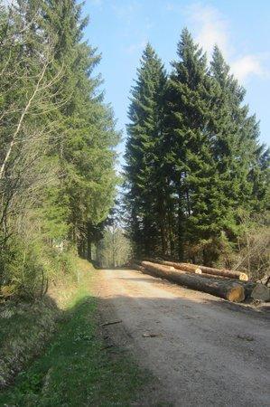 Chalet Hotel Le Collet : forêt