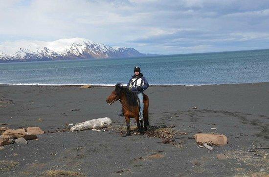 Riding At Saltvik Picture Of Saltvik Husavik Tripadvisor