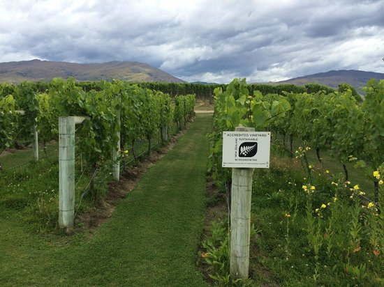 Appellation Central Wine Tours: vineyard