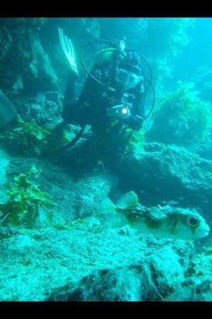 Paihia Dive: Porcupine fish :)