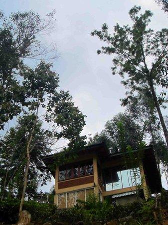 Tea Cottages Resort & Spa : Luxury Cottage