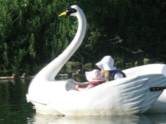 Parc des Îles de Toronto : swan peddle boat