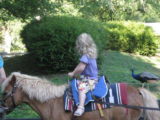 Parc des Îles de Toronto : pony rides