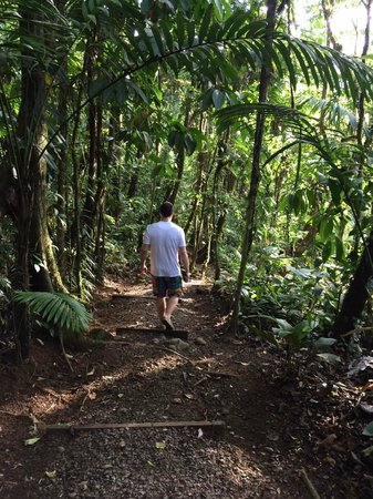 Rio Celeste Hideaway Hotel: Path to river