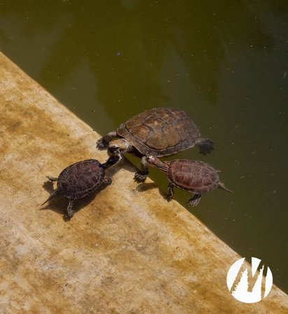 Cafe Jardin Majorelle Marrakech: The small turtles