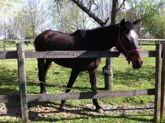 Agriturismo La Bisana : I cavalli dell'agriturismo