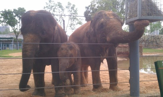 The adorable Elephant Family at the Houston Zoo