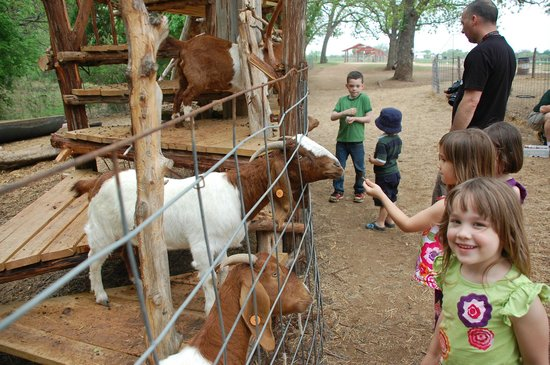 Sweet Berry Farm: The Goats were a Favorite Part of the  Day