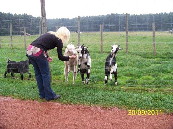 East Links Family Park: Feeding the animals