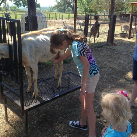 Happy Acres Family Farm: Milking the goat