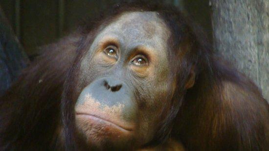 Henry Doorly Zoo: Avoiding eye contact