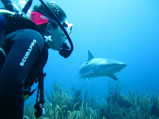 Ocean Explorers Dive Center: Shark Dive