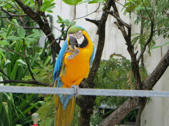St. Maarten Zoo : Love the colors!