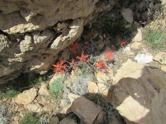 Walnut Canyon National Monument : Secret Flowrs