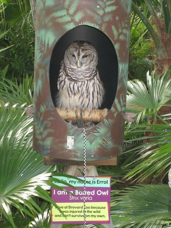 Brevard Zoo : The owl was real!
