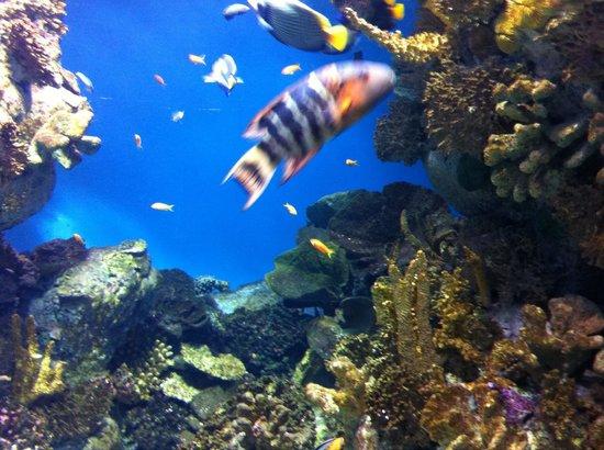 L'Aquarium de Barcelona: Πανεμορφο