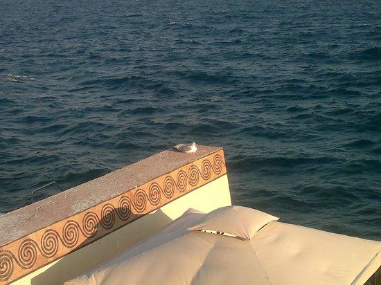 Yacht Club Hotel: Синее Черное море