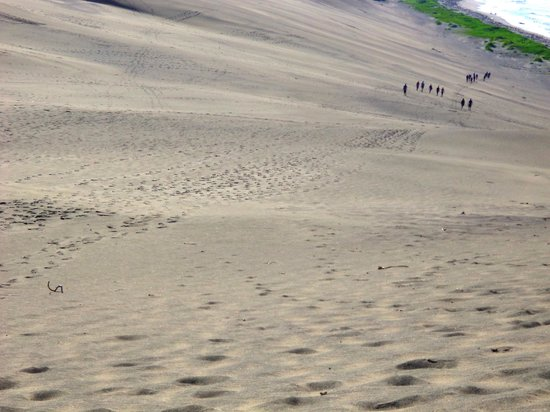 Sigatoka Sand Dunes National Park : Sand dunes down to Seashore