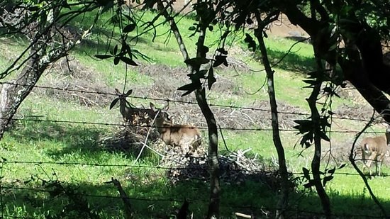 Westwood Hills Park: The deer looked up just in time