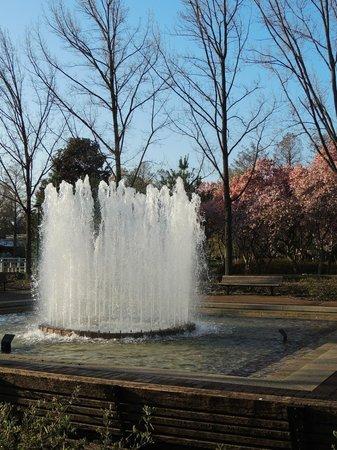 Missouri Botanical Garden: Central Fountain
