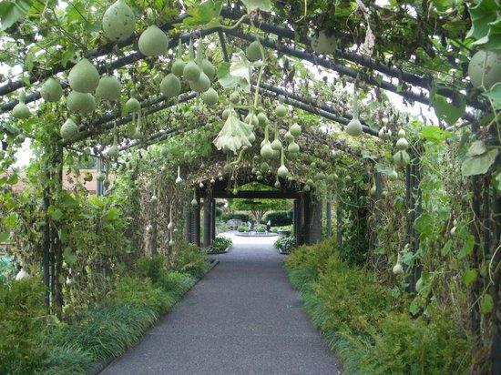 Missouri Botanical Garden: Gourds