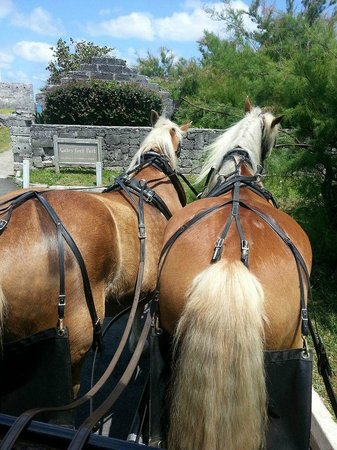 Bronco Stables Horse and Carriage Sightseeing Tours