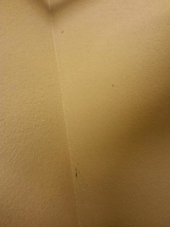 Super 8 Downtown Airport Area: Stains on wall
