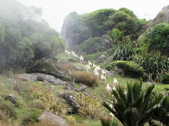 Westhaven Luxury Lodge: Sheep always ran away from us