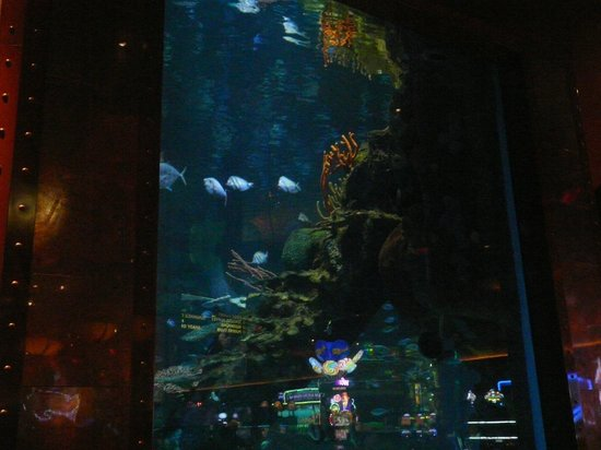 Silverton Hotel and Casino : View from Mermaid Bar of tank