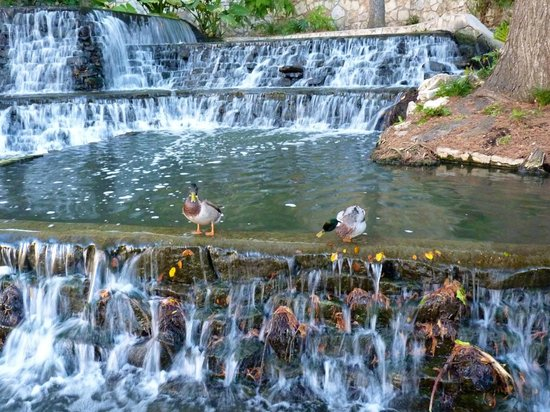 River Walk: Ducks, Riverwalk