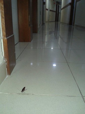 Dream Hotel Noelia Sur: curious crawling