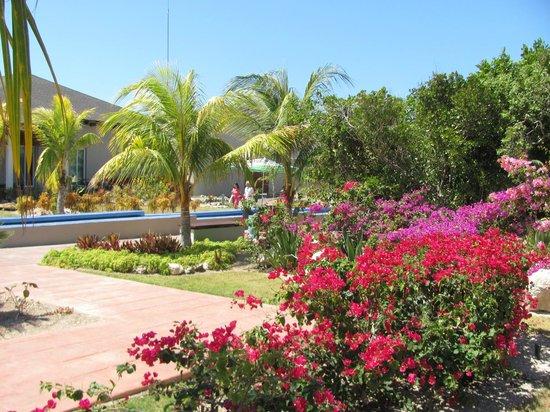 Hotel Cayo Santa Maria : près du loby