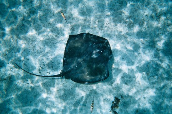 Stingray Beach: Large ray directly below me