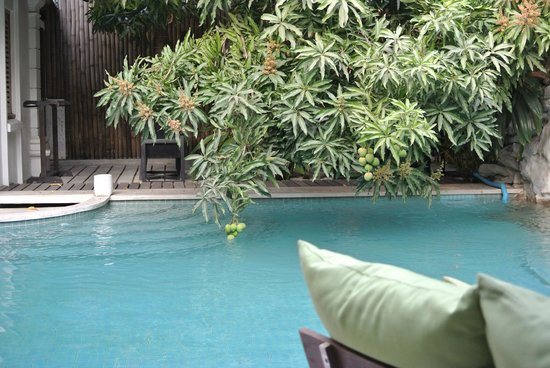 The Governors House Boutique Hotel Phnom Penh: The pool area with the low hanging fruit!