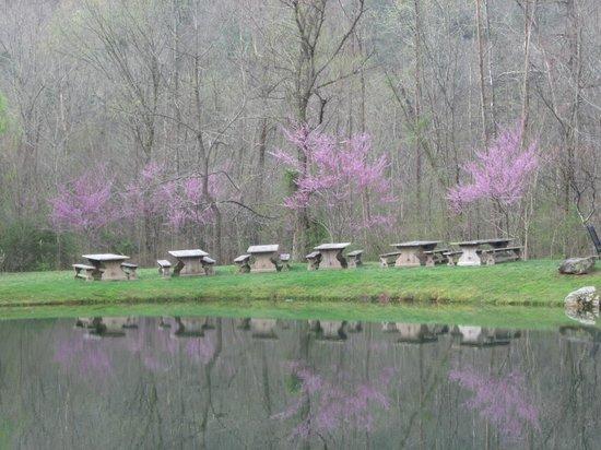 Blackberry Farm: Picnic tables near Hesse Creek