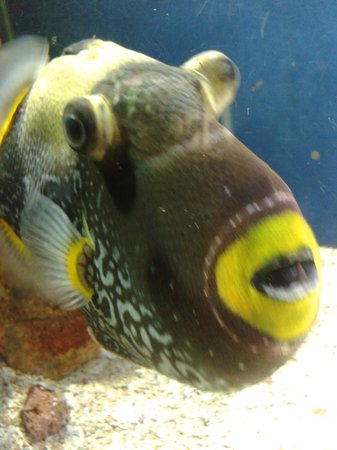 Ubatuba Aquarium: Peixe visto de pertinho