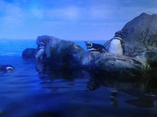 Ubatuba Aquarium: Vista parcial do aquário dos pinguins